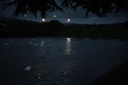 Swan scene (at Night)