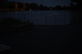 Swans at Night.